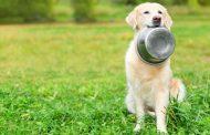 Cum sa cumperi cea mai buna hrana si mancare pentru animale