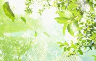Despre materiale biodegradabile si compostabile
